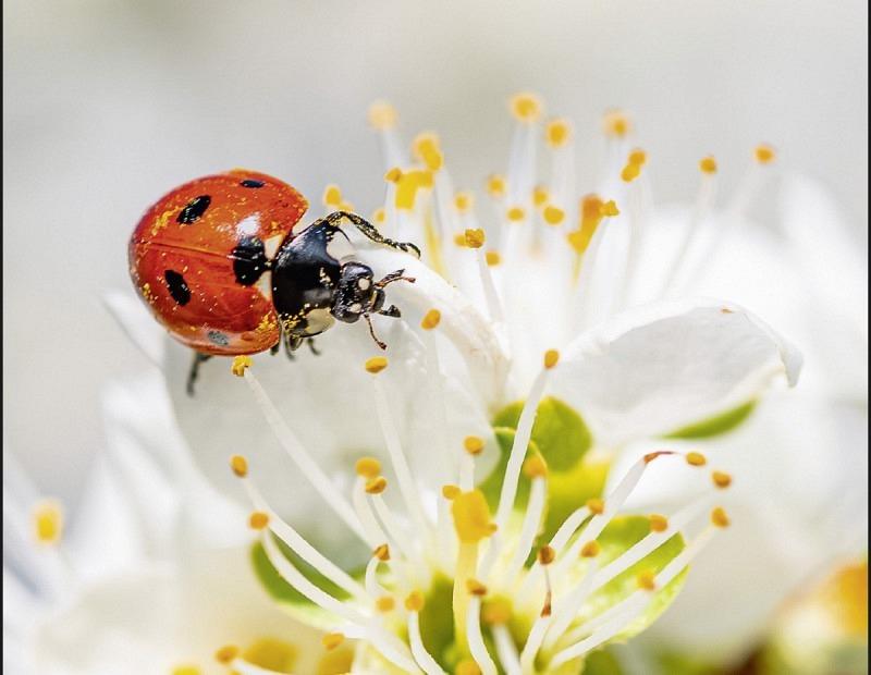 """Fotokartenset """"Blumen"""" im 10er Set"""